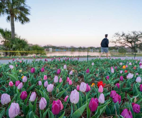 Der Big Lake im New Orleans City Park – Tulpen bei Sonnenuntergang