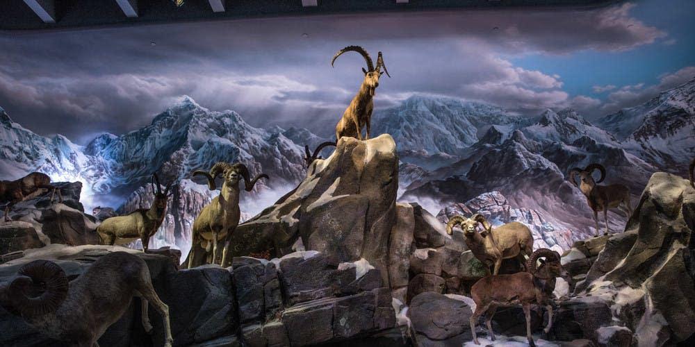 Wonders of Wildlife National Museum & Aquarium grand-opening-tour
