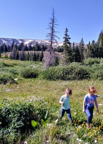 Snowy Range mountain meadow stroll