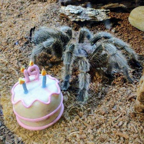 Birthday of Mr. T the Tarantula at the Boonshoft Museum of Discovery