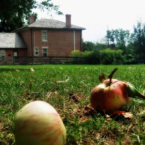 Coffman Homestead Fall