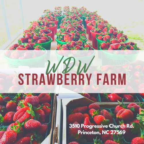 WDW Strawberry Farm located in Princeton, NC.