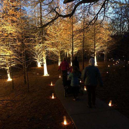 Luminary Walk at the OP Arboretum