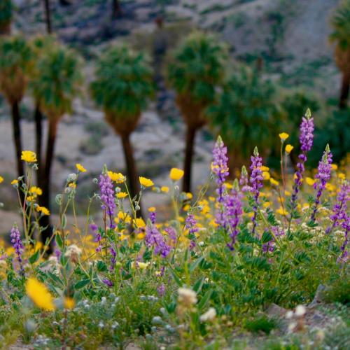 Flowers and palm trees in Greater Palm Springs.