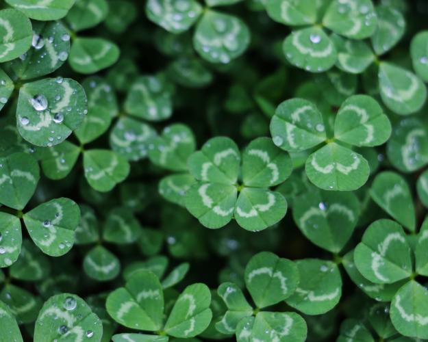 St. Patrick's & St. Joseph's Day