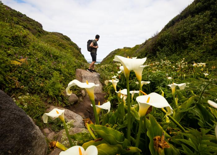 Man in Garrapata Beach Calla Lily Canyon