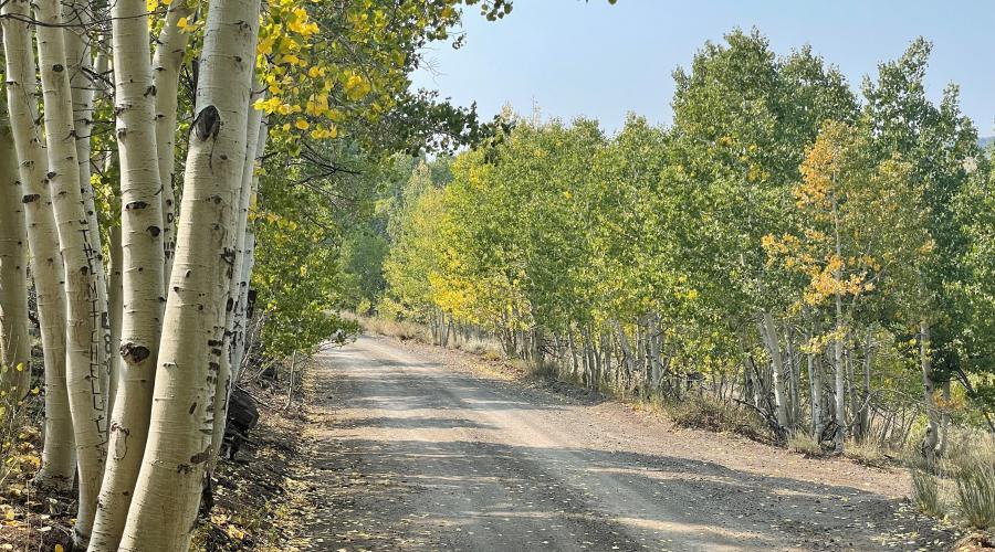 Lobdell Lake Road