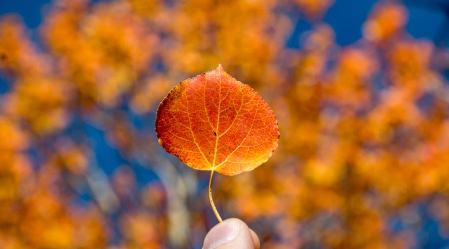 fall color leaf