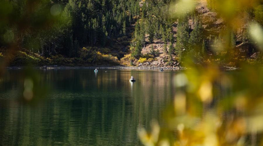 virginia lakes fishing