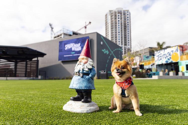 Sparkman Wharf Dog