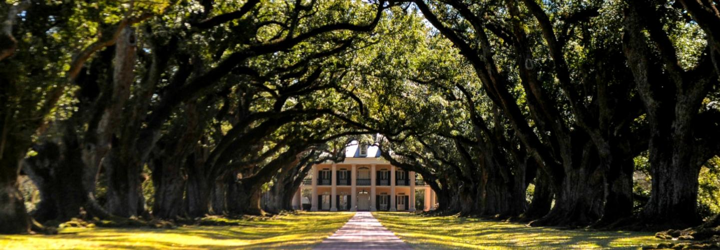 Tree-lined pathway leading to beautiful plantation home