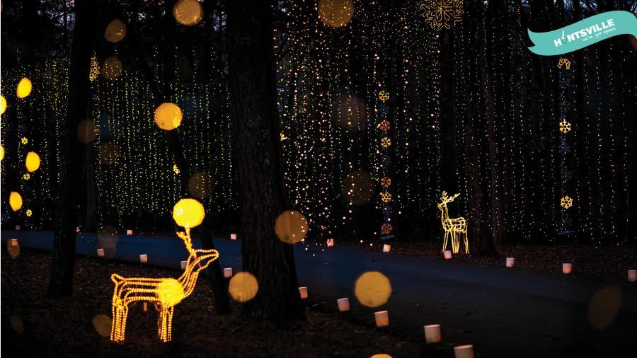 Holiday Zoom - Galaxy of Lights deer