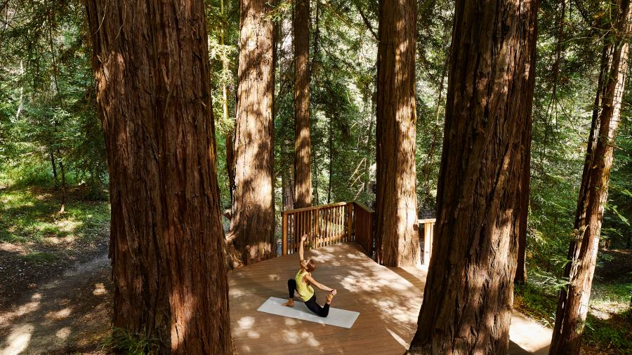 Yoga in the Redwoods at Canyon Ranch Woodside