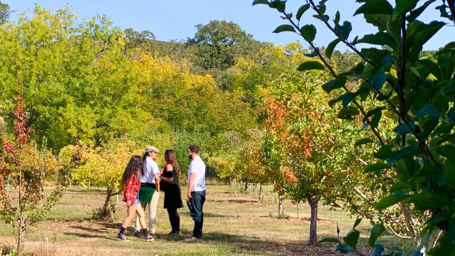 Orchard days at Filoli in Woodside Ca