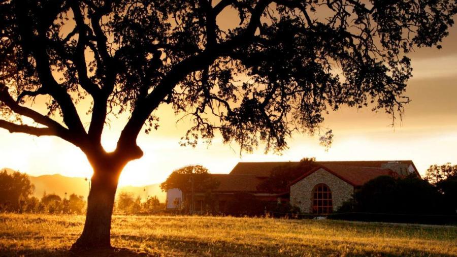 Winery Sunset in Vineyard