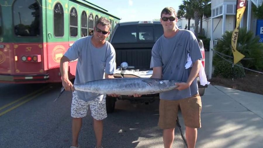 Video Thumbnail - vimeo - Blue Marlin