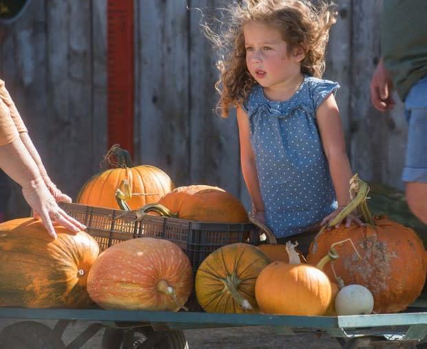 pumpkin-07-620x507