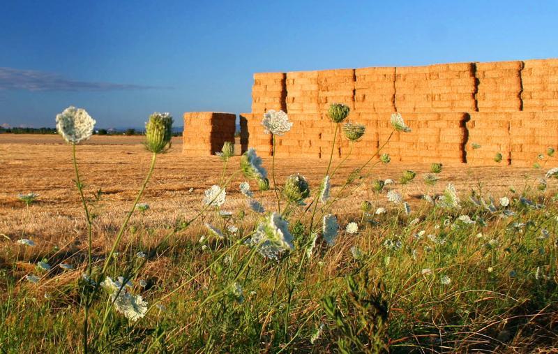 Beautiful Farm Lands in Summer by Erin Ortmann