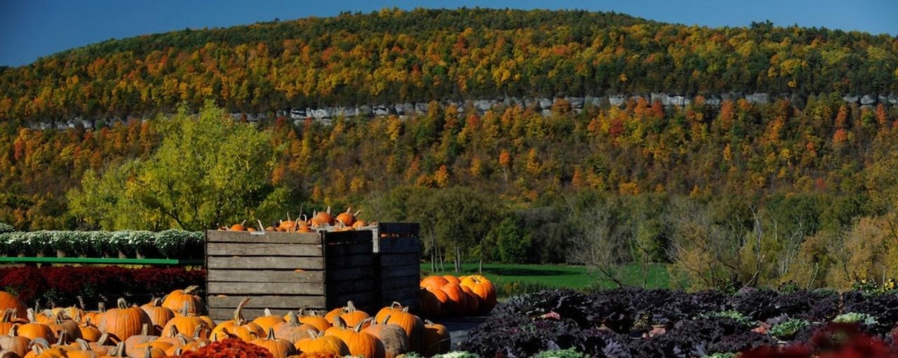 Schoharie Valley Farms and the Carrot Barn
