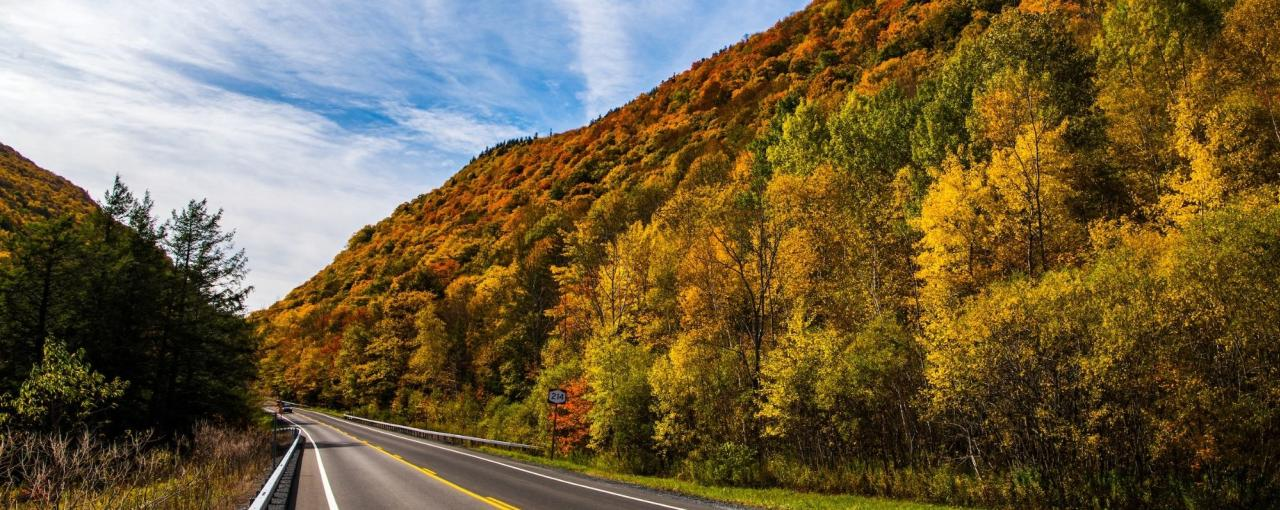 A road lined with fall foliage in Greene County, the Catskills