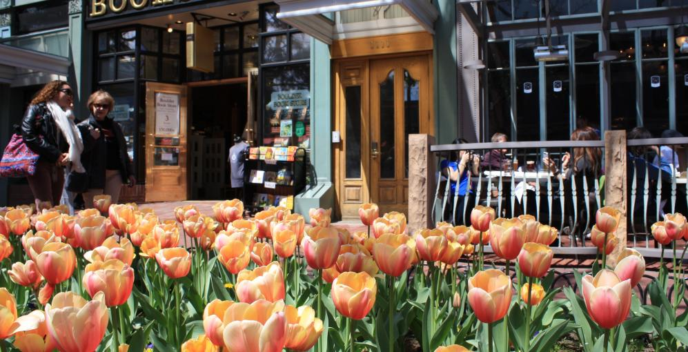 Tulips in front of Boulder Bookstore