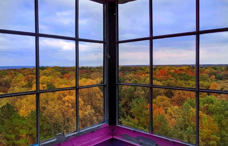 A view of the fall-toned tree tops in the Hoosier National Forest from the Hickory Ridge Fire Tower