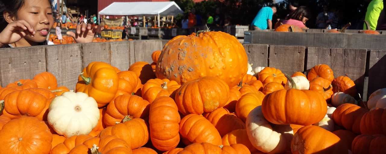 Anderson Orchard Pumpkins