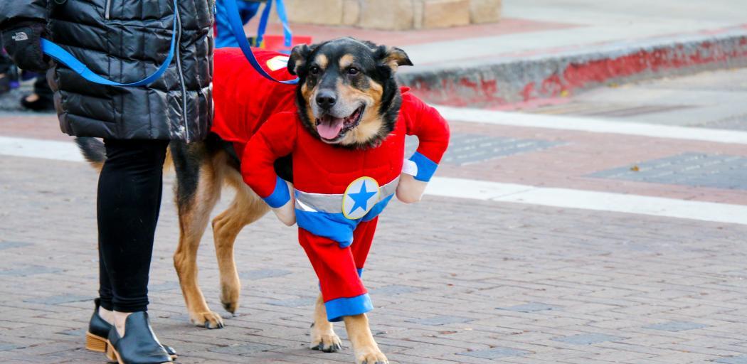 Dog in super hero costume