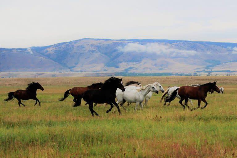 Deerwood Ranch Wild Horse Ecosanctuary