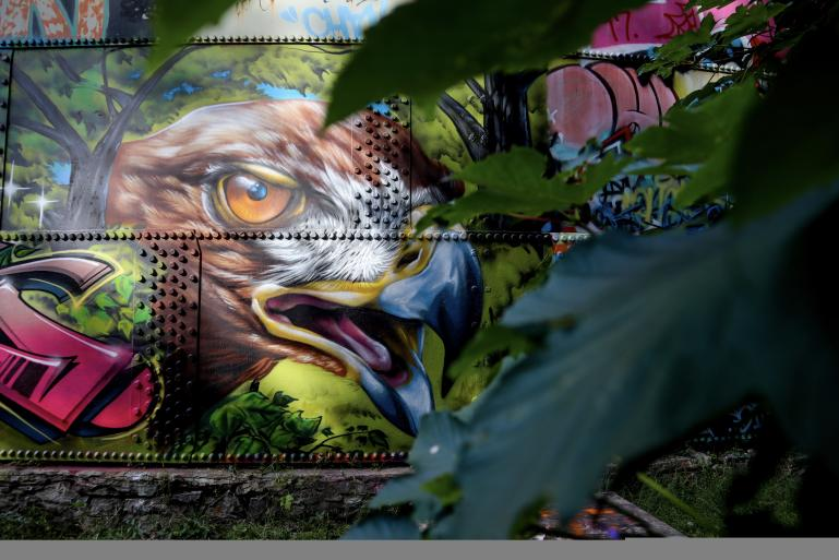 Mural of Eagle at Cobbs Hill Park