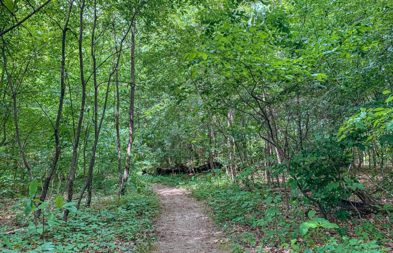 Latimer Woods from the trail in spring