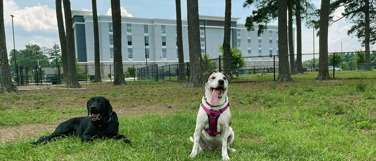 Two Dogs Pose at Benson Dog Park in front of Hampton Inn