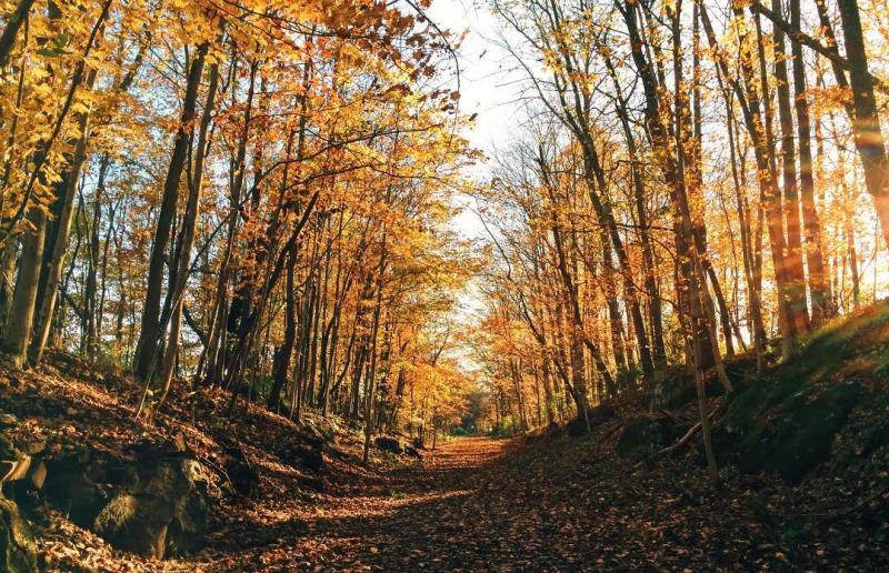 Bloomington Rail Trail during fall