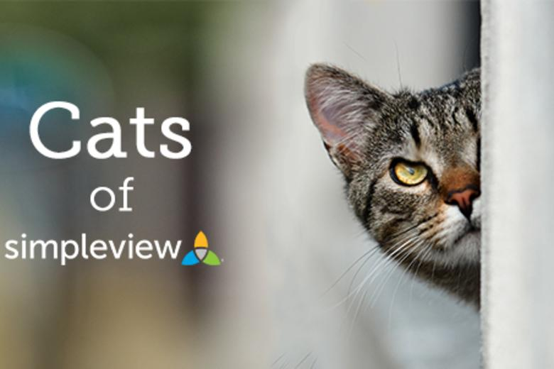 Cats of Simpleview