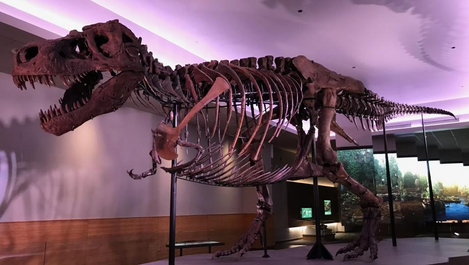 SUE Returns to the Field Museum | Choose Chicago
