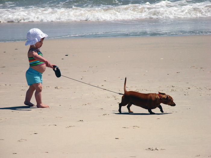 Pets on the Beach