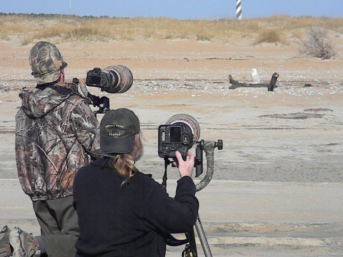 People Photographing A lighthouse snowy owl