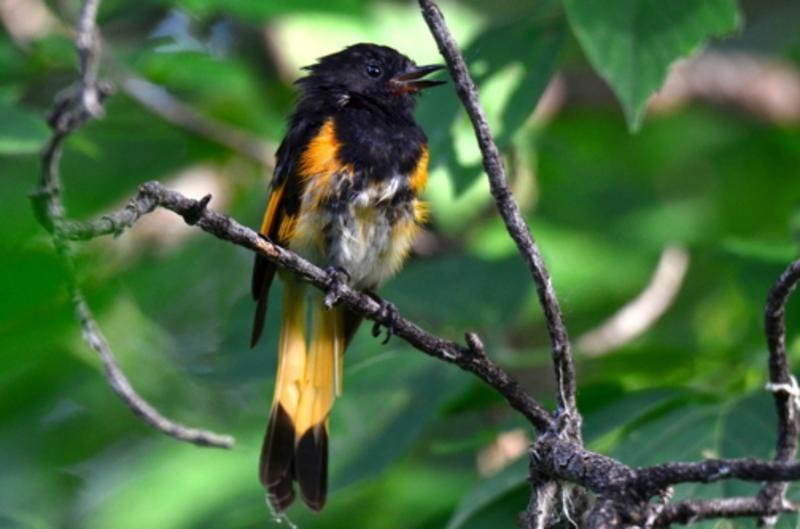 birding_at_palmer_lake