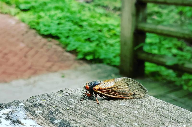 A cicada sitting on a picnic table