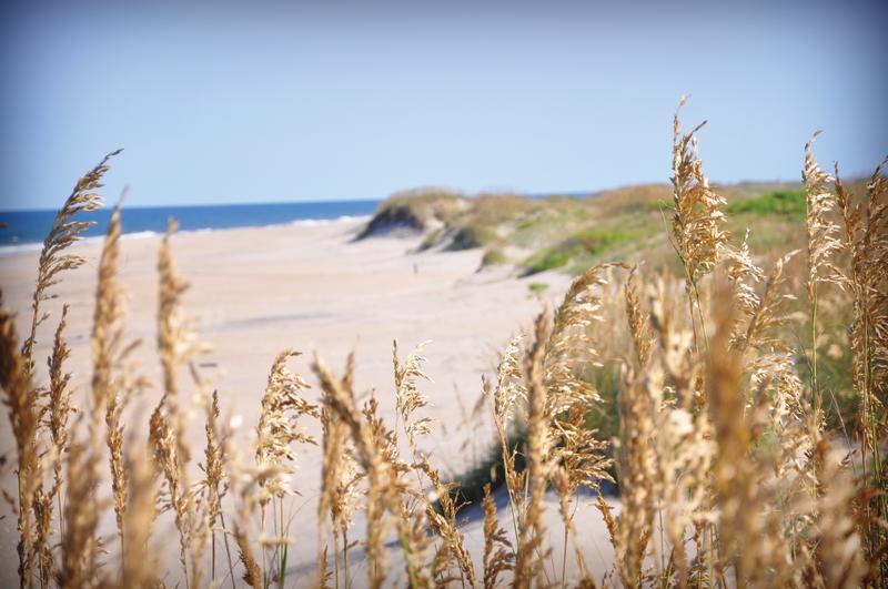 sea oats beach beauty shot