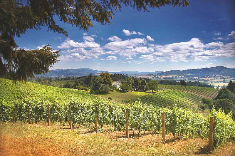 A vineyard and sunny skies from a hilltop