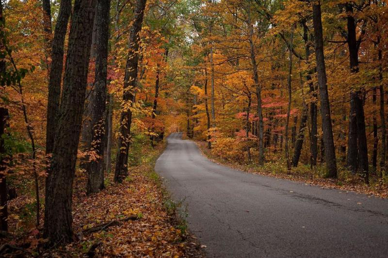Morgan-Monroe State Forest during fall