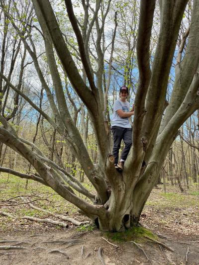 The Crazy Beech Tree!