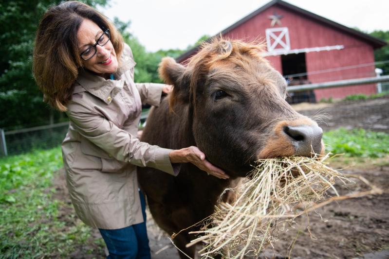 Cow Cuddling at Mountain Horse Farm