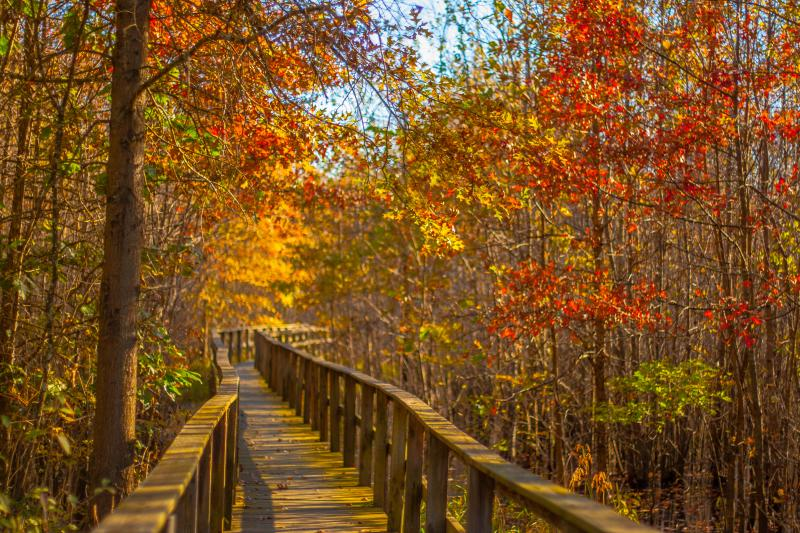 A raised walkway at Beanblossom Bottoms Nature Preserve near Bloomington, IN in the fall