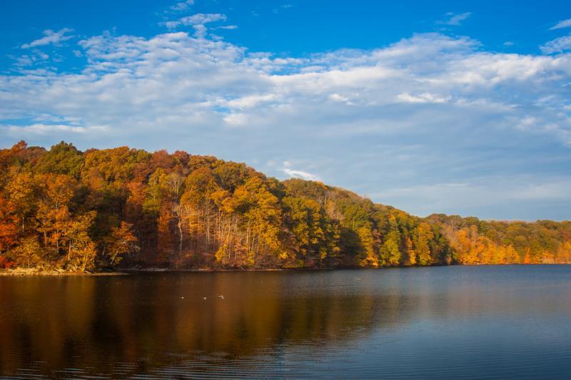 Fall Lake Griffy