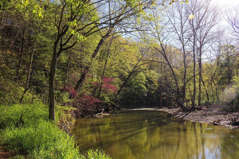 Cedar Bluffs Nature Preserve during spring