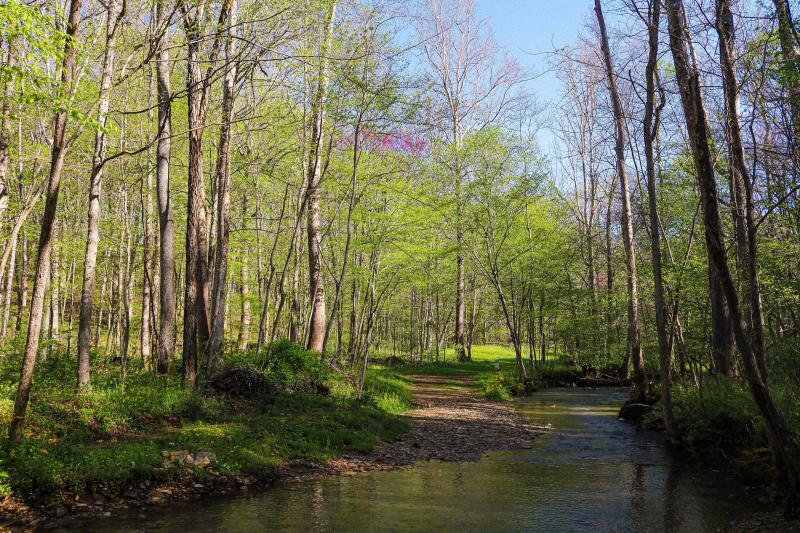 The Cedars Preserve during spring