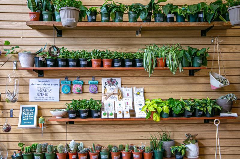 Display of potted plants at Gather
