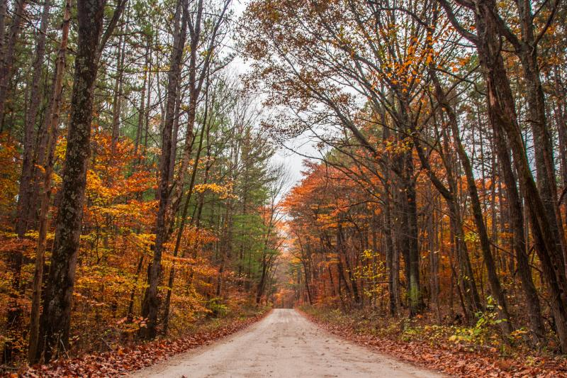Hoosier National Forest during fall
